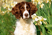 DOG 09 LS0004 01