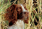 DOG 09 LS0005 01