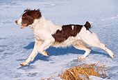 DOG 09 LS0007 01