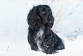 DOG 09 LS0008 01