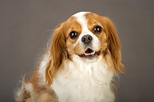 DOG 09 MR0002 01