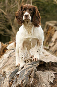 DOG 09 NR0009 01