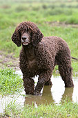 DOG 09 NR0027 01