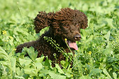 DOG 09 NR0028 01