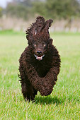 DOG 09 NR0029 01