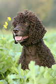 DOG 09 NR0030 01