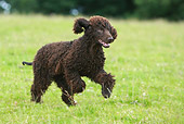 DOG 09 NR0039 01