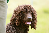 DOG 09 NR0040 01