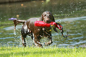 DOG 09 NR0045 01