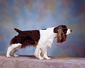 DOG 09 RK0003 05