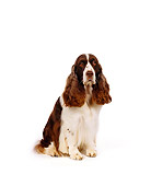 DOG 09 RK0008 02