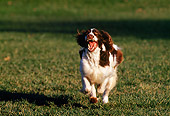 DOG 09 RK0011 06