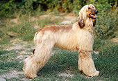 DOG 14 AB0001 01