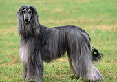 DOG 14 AB0002 01