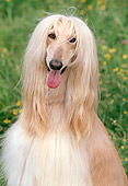 DOG 14 AB0003 01