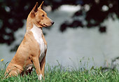 DOG 14 AB0005 01