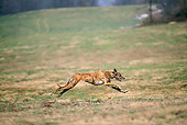 DOG 14 AB0012 01