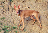 DOG 14 AB0013 01