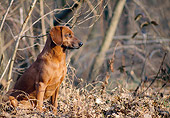 DOG 14 AB0015 01