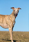 DOG 14 AB0019 01