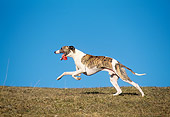DOG 14 AB0021 01