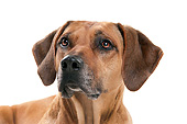 DOG 14 AC0009 01