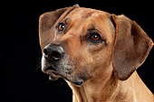 DOG 14 AC0010 01