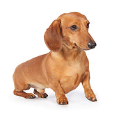 DOG 14 BK0004 01