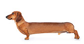 DOG 14 BK0010 01