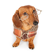 DOG 14 BK0012 01