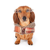 DOG 14 BK0013 01