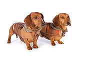 DOG 14 BK0015 01
