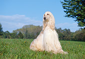 DOG 14 CB0001 01