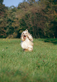 DOG 14 CB0002 01