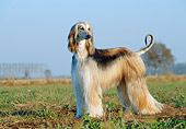 DOG 14 CB0003 01