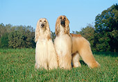 DOG 14 CB0005 01