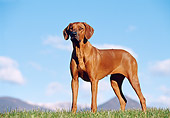 DOG 14 CB0006 01