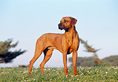 DOG 14 CB0009 01