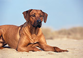DOG 14 CB0011 01