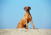 DOG 14 CB0015 01