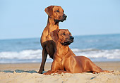 DOG 14 CB0020 01