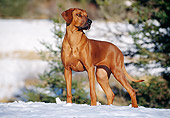 DOG 14 CB0021 01