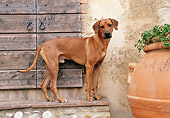 DOG 14 CB0023 01
