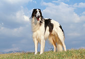 DOG 14 CB0026 01