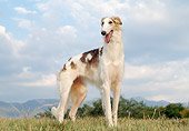 DOG 14 CB0027 01