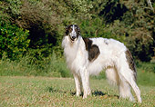DOG 14 CB0028 01