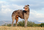 DOG 14 CB0032 01