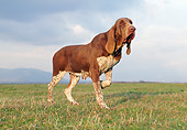 DOG 14 CB0033 01