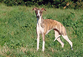 DOG 14 CB0035 01