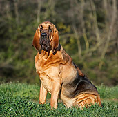 DOG 14 CB0044 01
